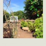 """""""a window recycled as a cold frame in our allotment-style garden."""""""