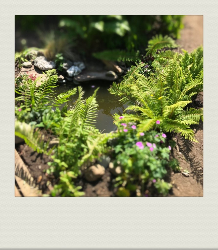 """""""a new wildlife pond in our cumbrian-based allotment-style garden"""""""