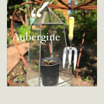 """""""A small aubergine plant temporarily growing in a terrarium."""""""