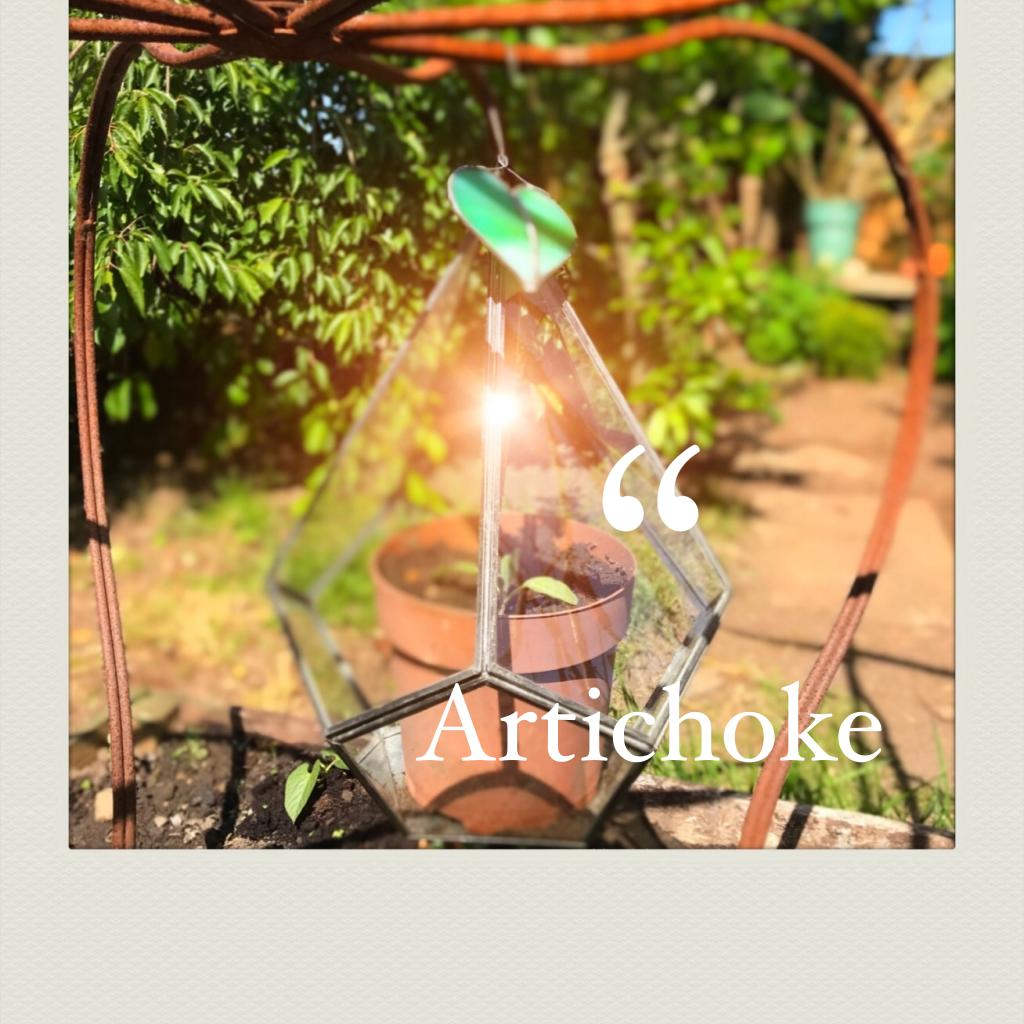 """a small artichoke plant temporarily growing in a terrarium."""