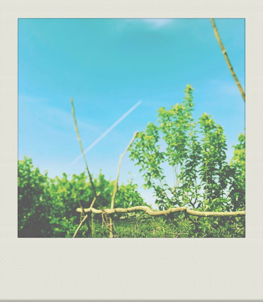 """""""blue sky and hazel supports in our allotment-style garden."""""""