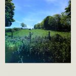 """""""the view to the long field from our allotment-style garden."""""""